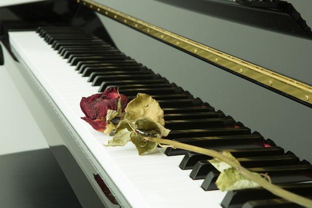 Suszona róża na fortepianie z czarnym na białym tle.
