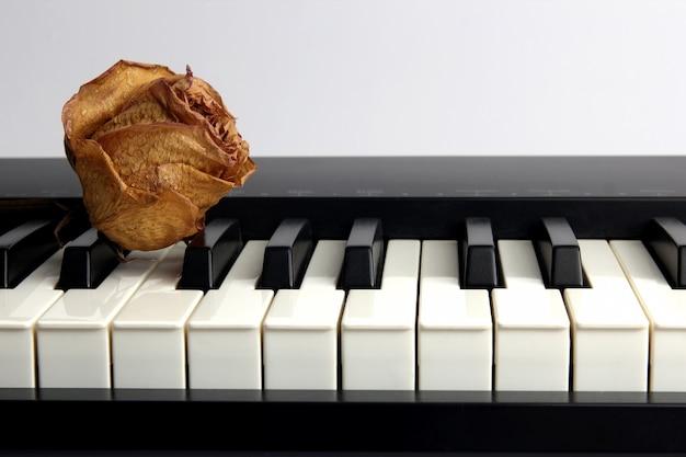 Suszona róża z kroplami wody leży na fortepianie
