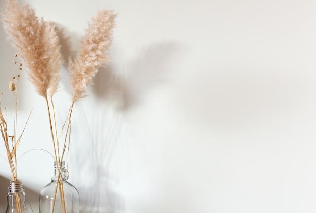 Suszona trawa pampasowa w szklanym wazonie na drewnianym stole w pobliżu białej ściany, nowoczesna jasna dekoracja
