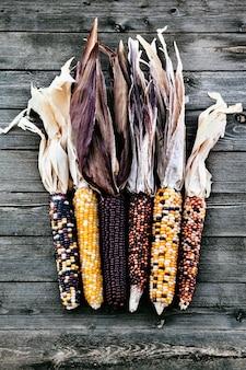 Suszona wielobarwna indyjska kukurydza na sezon jesienny