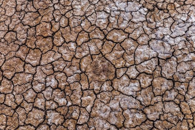 Suszona ziemia z kryształkami soli