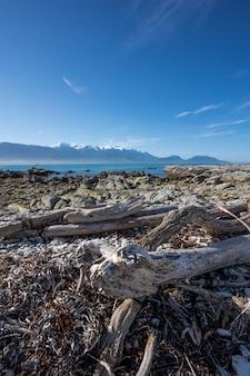 Suszone drzewo na plaży
