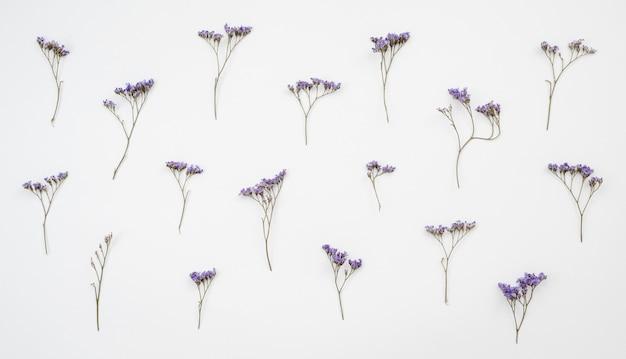 Suszone dzikie kwiaty na białym tle