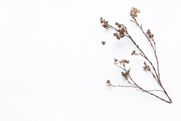 Suszone gałązki kwiatowe