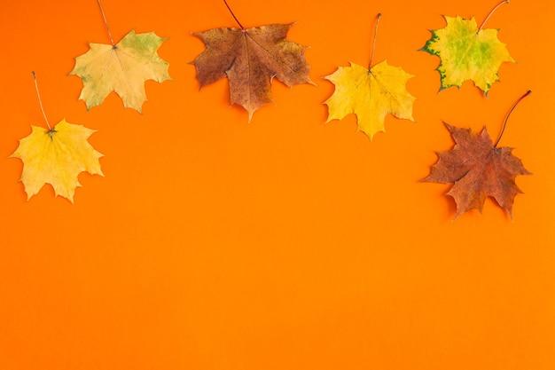 Suszone jasne jesienne liście na pomarańczowym stole