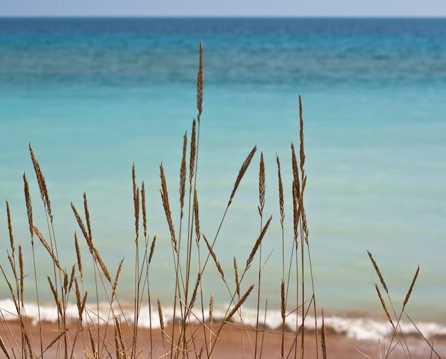 Suszone krzewy nad morzem