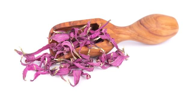 Suszone kwiaty echinacea w drewnianą szufelką, na białym tle. płatki echinacea purpurea. zioła medyczne.