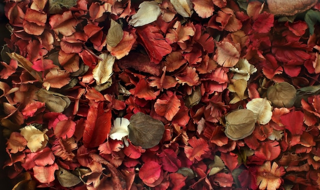 Suszone kwiaty i liście