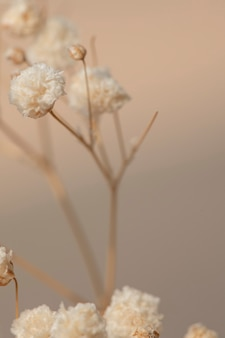 Suszone kwiaty łyszczec makro