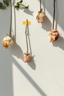 Suszone kwiaty róży przyklejone taśmą do białej ściany