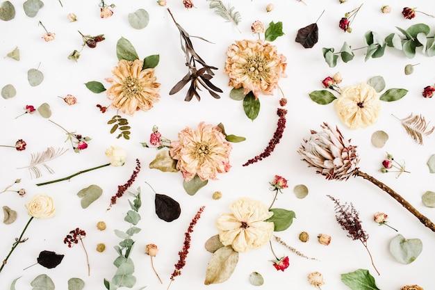 Suszone kwiaty tekstury: beżowa piwonia, protea, gałęzie eukaliptusa, róże na białym tle. płaski świeckich, widok z góry. kwiatowe tło