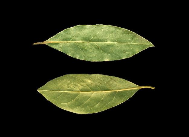 Suszone liście laurowe, na czarnym tle