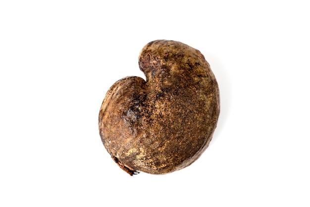 Suszone nerkowca, nasiona owoców orzechów nerkowca na białym background.top widoku, leżał falt.