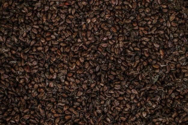 Suszone pestki winogron. close-up powierzchni surowych nasion jako tło.