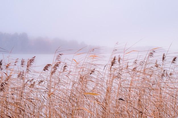Suszone rośliny na brzegu jeziora