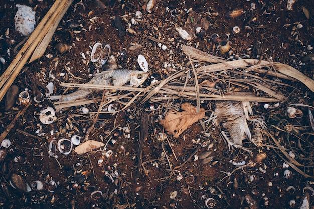 Suszone ryby padły na ziemi. a są też muszle i kawałki gałązek.