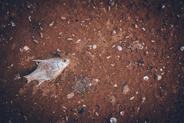 Suszone ryby zdechły na ziemi. suszone ryby zdechły na ziemi. suszone ryby zdechły na ziemi.