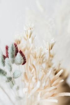 Suszone tło trawy bunny tail