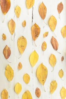 Suszone żółte jesienne liście na starej białej drewnianej powierzchni