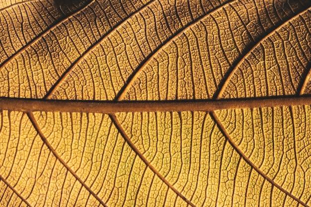 Suszony liść; drobne szczegóły i bardzo wysoka rozdzielczość tła. ekstremalne makro zbliżenia jesiennego liścia z drobnymi szczegółami