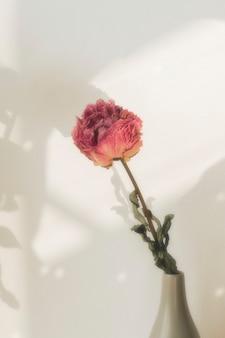 Suszony różowy kwiat piwonii w szarym wazonie