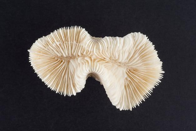 Suszony szkielet koralowy na czarno