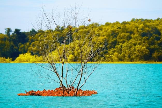 Suszy drzewa i spada czerwonych liście w błękitne wody w jeziorze i kolor żółty opuszcza las