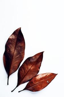 Suszy liście na białym tle