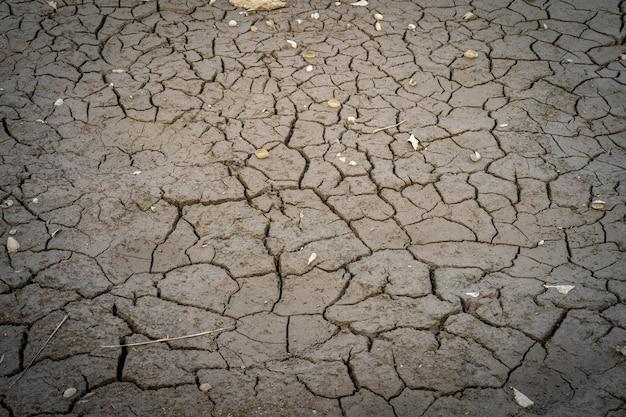 Suszyć popękaną ziemię podczas letnich upałów.