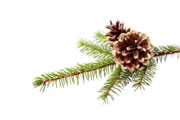 Świąteczna dekoracja - gałązka jodły z pozłacanymi szyszkami, izolacja na białym tle