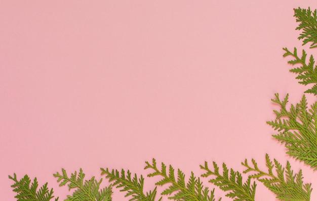Świąteczne tło boże narodzenie, gałęzie jodły na różowym tle, płaskie lay, widok z góry