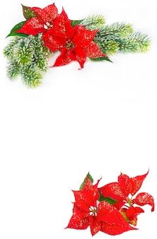 Świąteczne tło z bożonarodzeniowymi kwiatami czerwoną poinsecją i wiecznie zielonym drzewkiem