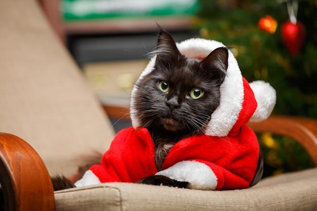 Świąteczne zdjęcie czarnego kota w stroju świętego mikołaja na fotelu na tle choinki