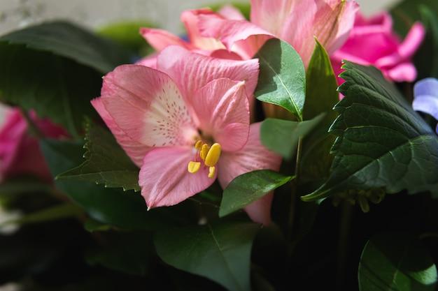 Świąteczny bukiet różnorodnych kwiatów, w tym różowa alstroemeria