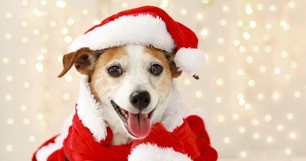 Świąteczny pies jako mikołaj