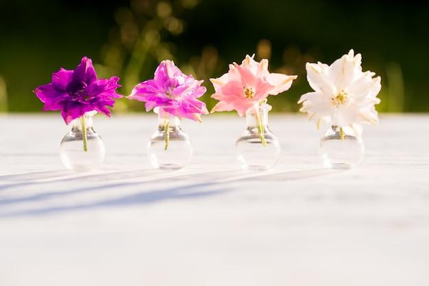 Światło i cień. fioletowe kwiaty kocanki, letni wieczór we wsi, ciepły słoneczny zachód słońca, cienie na zewnątrz. piękne rośliny bataniki w szklanej kolbie