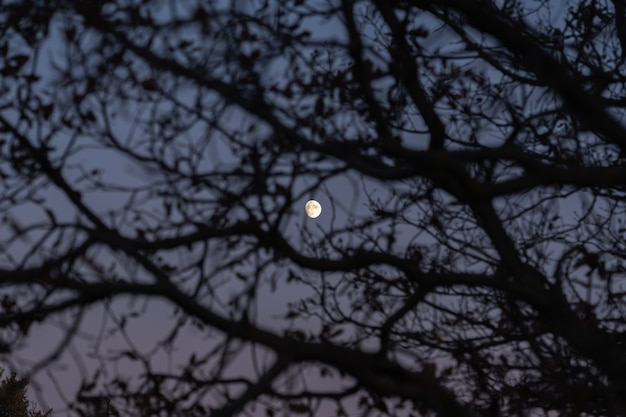 Światło księżyca przez gałęzie drzewa