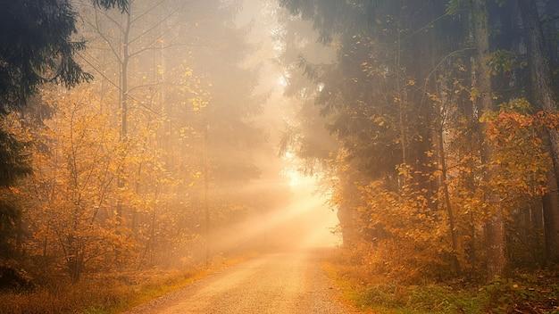Światło przez drogę między drzewami