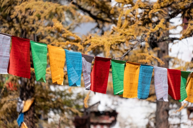 Światło słoneczne lśni w złotym lesie sosnowym z kolorowymi flagami modlitewnymi latającymi w dolinie