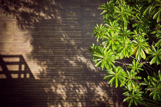 Światło słoneczne na drewnianej podłodze z cieniami drzew i budynku.