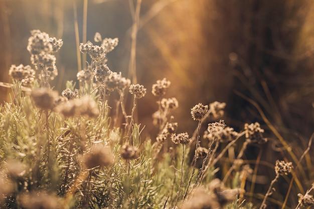 Światło słoneczne na martwe kwiaty