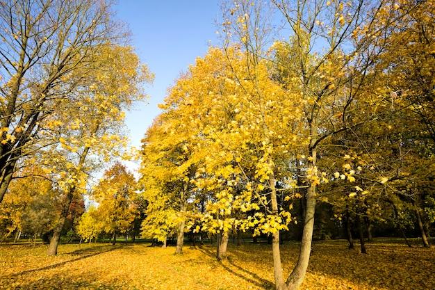 Światło słoneczne oświetla park jesienią