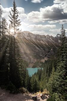 Światło słoneczne padające na las sosnowy z jeziorem louise w parku narodowym banff, kanada