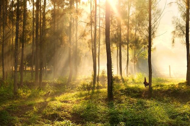 Światło słoneczne przebijające się przez drzewa i promienie światła