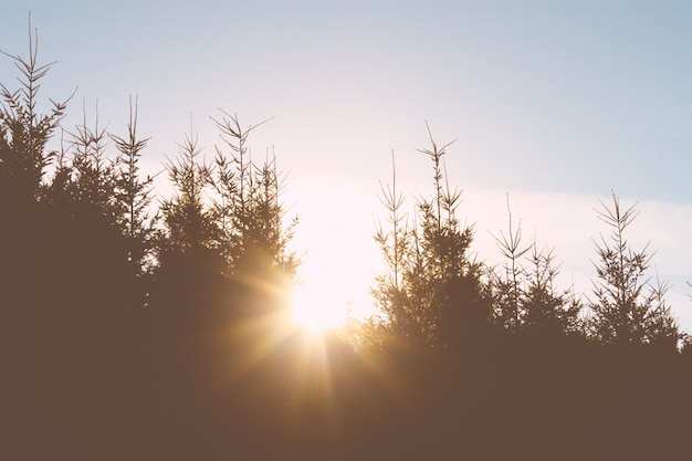 Światło słoneczne wpadające przez drzewa