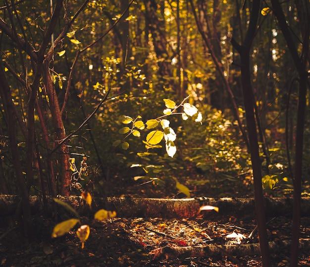 Światło wpadające przez liście na leśnej ścieżce w jesienny dzień