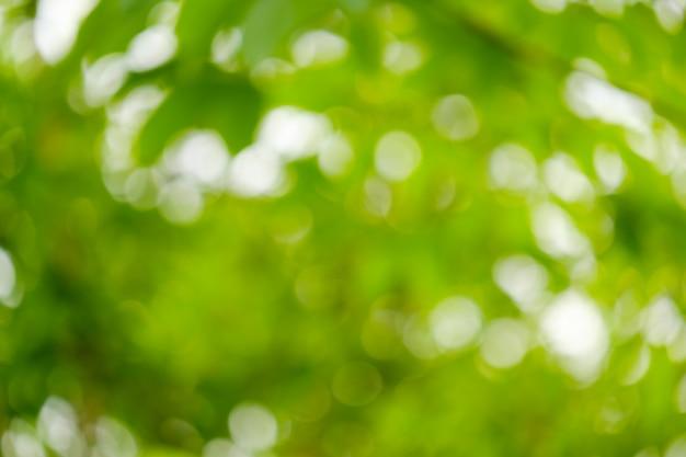 Światło z ostrości, rozmazane tło. bokeh z naturalnych zielonych liści
