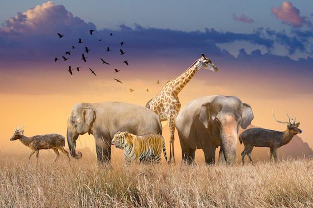 Światowy dzień dzikiej przyrody grupy dzikich zwierząt zbierały się w duże stada na otwartym polu wieczorem, kiedy świeciło złote słońce.