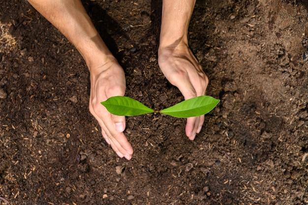 Światowy dzień ochrony środowiska, sadzenie drzew i miłość do środowiska, miłość do przyrody.