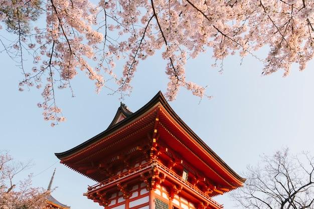 Świątynia kiyomizu-dera i sakura w japonii